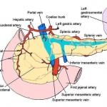 Diagram to illustrate pancreatic blood supply
